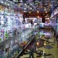 Smoker's Kingdom Smoke Shop