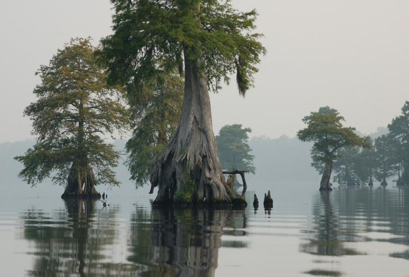 Swamp Vapor